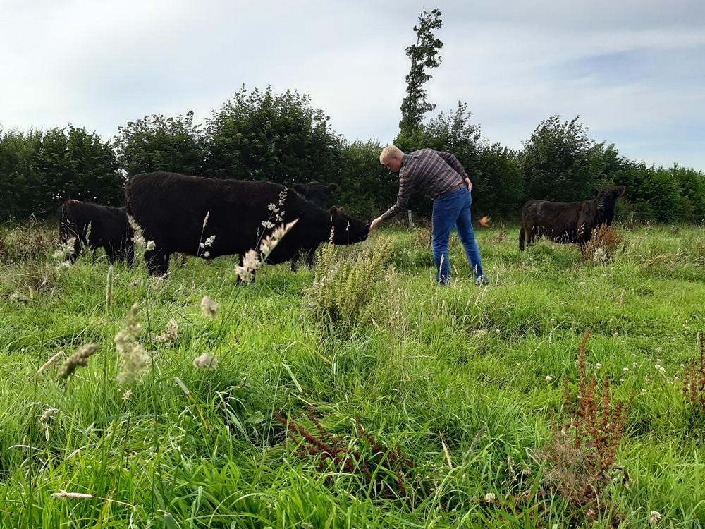 Landwirt Marten Nissen bei seiner täglichen Tierkontrolle auf der Weide